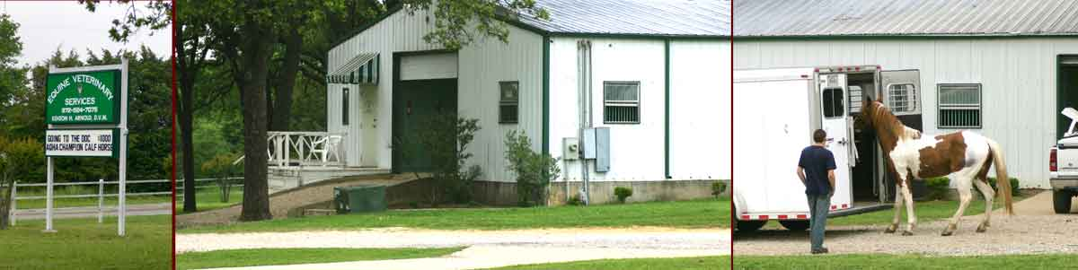 Equine Veterinary Services clinic in Terrrell, Texas